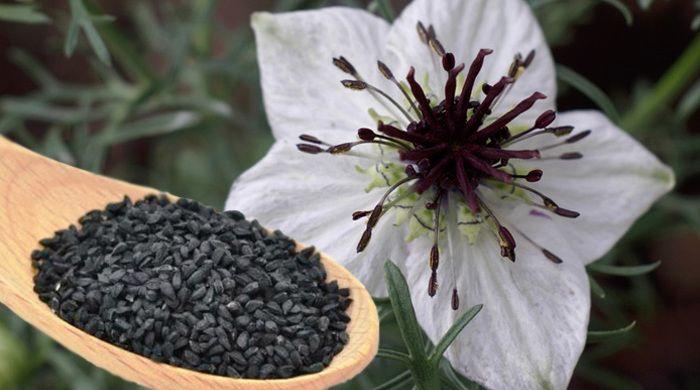 Remedii naturiste pentru tuse - ulei de samanta neagra