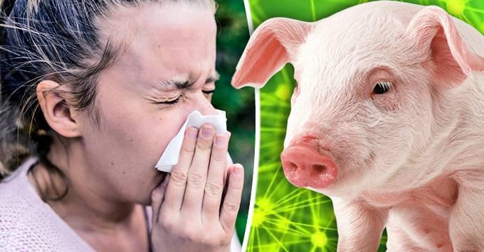 gripa porcina - tot ce trebuie sa stii_compressed