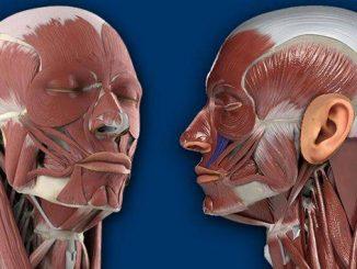 Corpul uman - cover